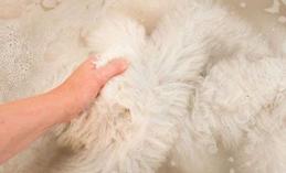Bạn đã từng giặt đồ lông thú chưa ? dù đã tưng hay chưa thì cứ đọc bài viết này xem nhé