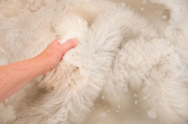 2 Cách giặt áo lông thú đơn giản cực hiệu quả